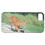 Tiger on path iPhone 5 cases