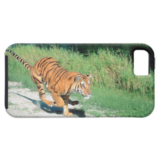 Tiger on path iPhone 5 covers