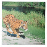 Tiger on path large square tile