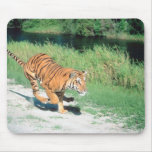 Tiger on path mouse pad