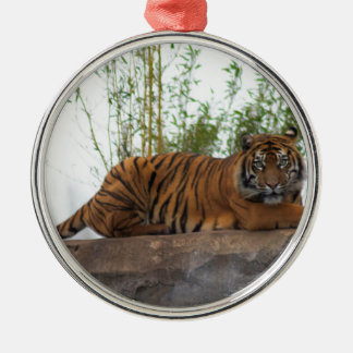 Tiger on the rocks christmas ornament