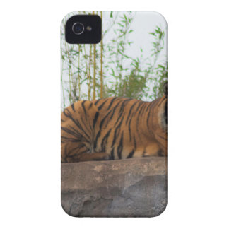 Tiger on the rocks iPhone 4 cover
