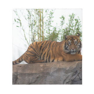 Tiger on the rocks notepad