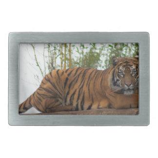 Tiger on the rocks rectangular belt buckles