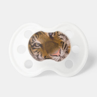 Tiger Pacifiers