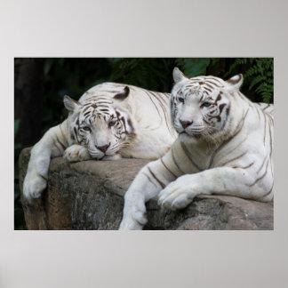 Tiger pair print