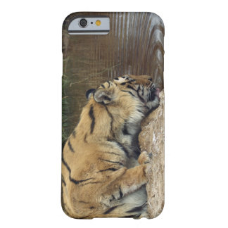 Tiger (Panthera tigris) lapping water up from a Barely There iPhone 6 Case