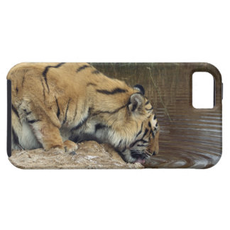 Tiger (Panthera tigris) lapping water up from a iPhone 5 Cover