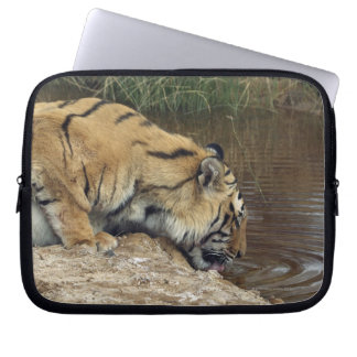Tiger (Panthera tigris) lapping water up from a Laptop Sleeve