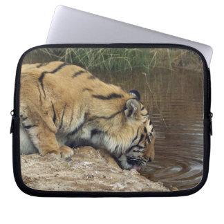 Tiger (Panthera tigris) lapping water up from a Laptop Sleeves