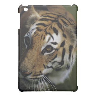 Tiger (Panthera tigris) standing, close-up of iPad Mini Covers