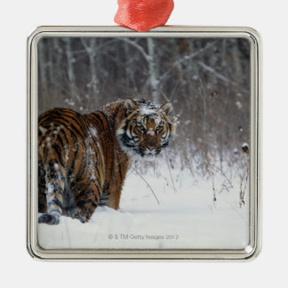 Tiger (Panthera tigris) standing in deep snow Christmas Ornament