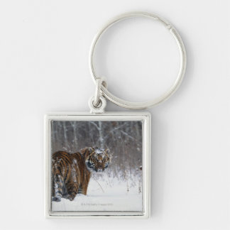 Tiger (Panthera tigris) standing in deep snow Key Ring
