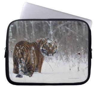 Tiger (Panthera tigris) standing in deep snow Laptop Sleeve