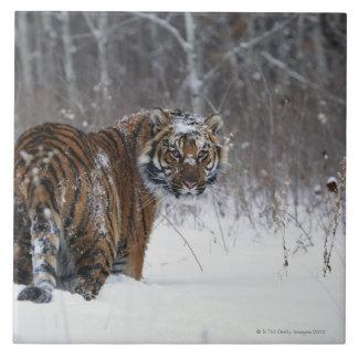 Tiger (Panthera tigris) standing in deep snow Tile