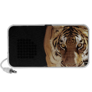 Tiger (Panthera tigris) Travel Speaker