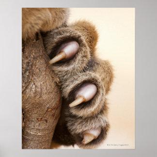 Tiger paw poster