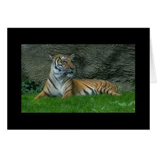 Tiger Paws Card