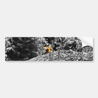 Tiger Peek-a-boo Bumper Sticker
