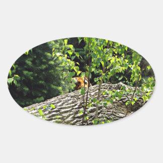Tiger Peek-a-boo Sticker