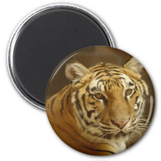 Tiger Picture 6 Cm Round Magnet