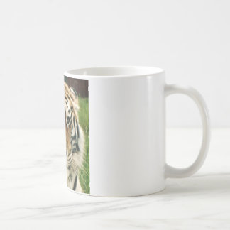 Tiger Picture Close Up Coffee Mug
