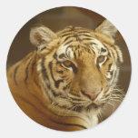 Tiger Picture Round Sticker