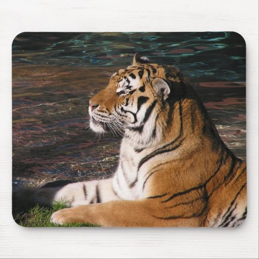Tiger Portrait Mousepad
