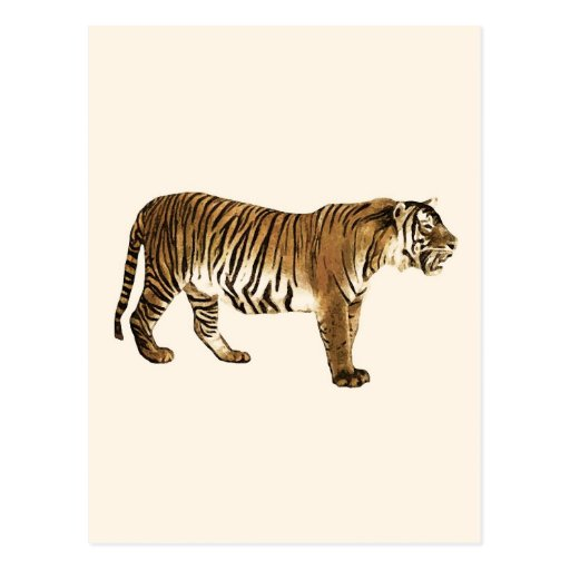Tiger Post Cards