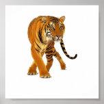 Tiger Prowl Print