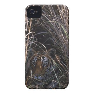 Tiger Reclines in Tall Grass iPhone 4 Cases