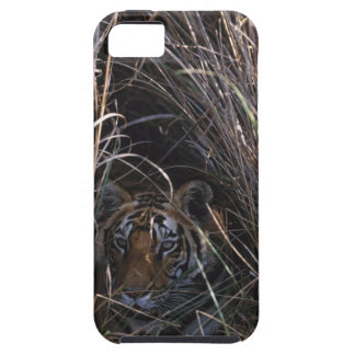 Tiger Reclines in Tall Grass iPhone 5 Covers