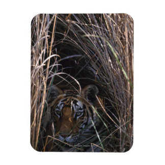 Tiger Reclines in Tall Grass Rectangle Magnet