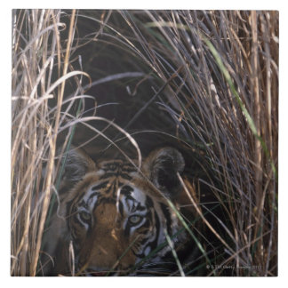 Tiger Reclines in Tall Grass Tile