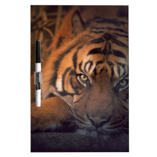 Tiger resting at night dry erase board