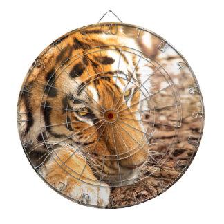 Tiger resting dartboard