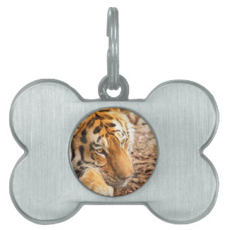 Tiger resting pet tag