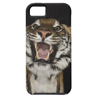 Tiger roaring 2 case for the iPhone 5
