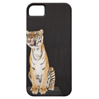 Tiger roaring barely there iPhone 5 case