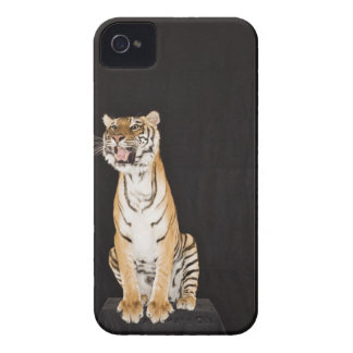 Tiger roaring iPhone 4 case