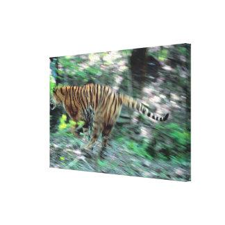 Tiger running canvas print