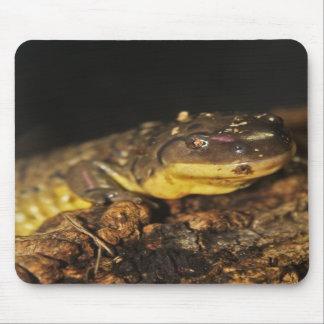 Tiger Salamander Mouse Pads