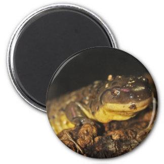 Tiger Salamander Refrigerator Magnet