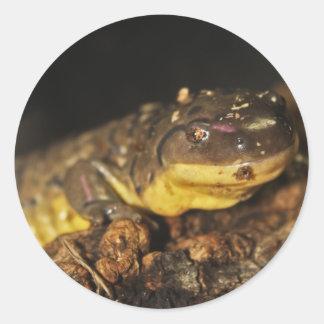 Tiger Salamander Round Sticker
