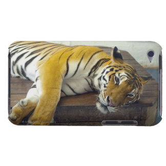 Tiger, Samui, Thailand Barely There iPod Cases
