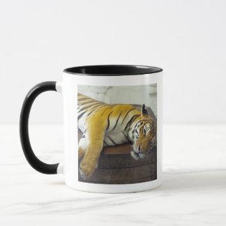Tiger, Samui, Thailand Mug