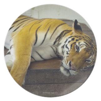Tiger, Samui, Thailand Plate
