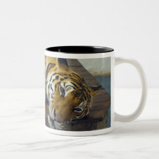 Tiger, Samui, Thailand Two-Tone Coffee Mug