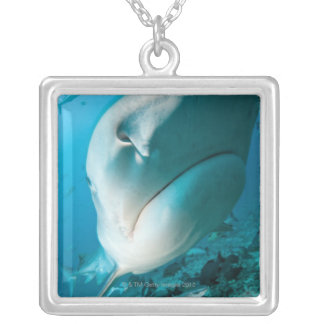 Tiger shark (Galeocerdo cuvier) Shark feed Silver Plated Necklace