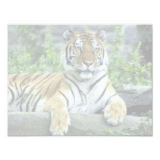 Tiger, Siberian Personalized Invitations
